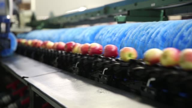 vidéos et rushes de gala apples move quickly past scrubbers on gala apple processing line at rasch family orchards packing facility in grand rapids michigan us on... - conditionnement