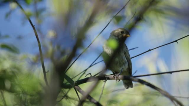galapagos bird - branch stock videos & royalty-free footage