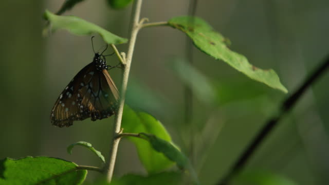 galapagos butterfly - ecuador stock videos and b-roll footage