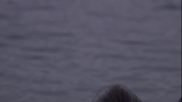 vídeos y material grabado en eventos de stock de a galapagos fur seal looks around. available in hd. - foca peluda