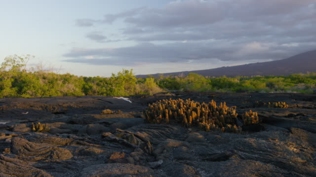 galapagos island - coastal feature stock videos & royalty-free footage
