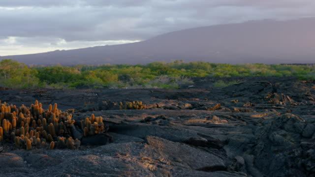 galapagos island - extremlandschaft stock-videos und b-roll-filmmaterial
