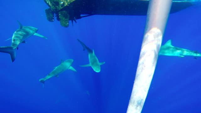 galapagos shark - galapagos shark stock videos & royalty-free footage