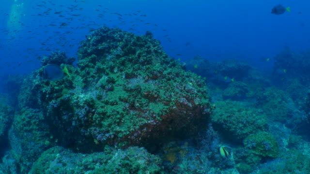ガラパゴスの海底のサンゴ礁 - チャールズ・ダーウィン点の映像素材/bロール