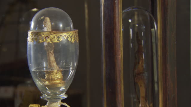 stockvideo's en b-roll-footage met galileo galilei's middle finger on display inside museo galileo, florence, italy - wide shot - galileo galilei