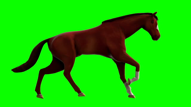 gallop horse green screen (loopable) - horse stock videos & royalty-free footage