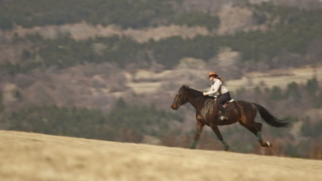 hd: galloping along countryside - recreational horse riding stock videos & royalty-free footage
