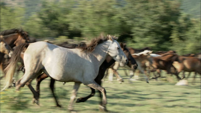 vídeos de stock, filmes e b-roll de galloping herd of horses - grupo grande de animais