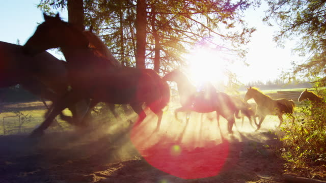 galloping horses in wilderness roundup dude ranch america - gallop animal gait stock videos & royalty-free footage