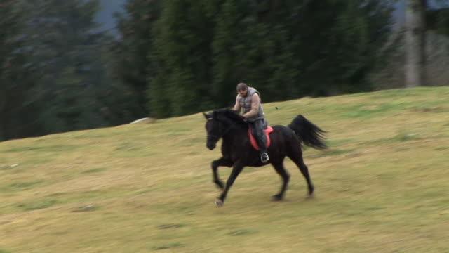 vídeos de stock, filmes e b-roll de hd: cavalo no prado - passageiro