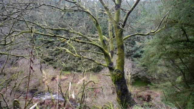 galloway forest woodland scotland - david johnson stock videos & royalty-free footage