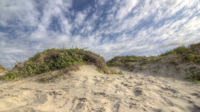 galveston texas sand dune - sand dune stock videos & royalty-free footage