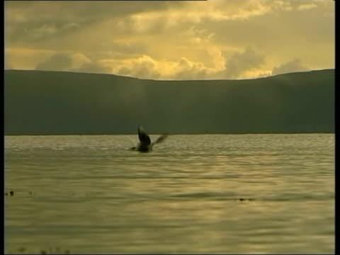 vidéos et rushes de galway: ext following seq has irish music overlaid sea as water lapping against rocks seagulls dusk gv sunset - rock moderne