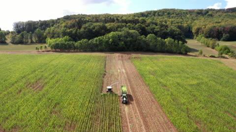 vídeos y material grabado en eventos de stock de game animals damage in the corn field - cosechar