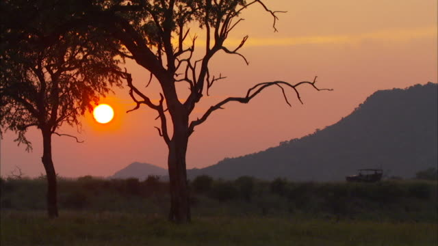 A game drive vehicle travels through the veld at sunset. Available in HD