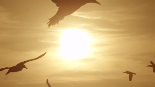 ganets - 数匹の動物点の映像素材/bロール