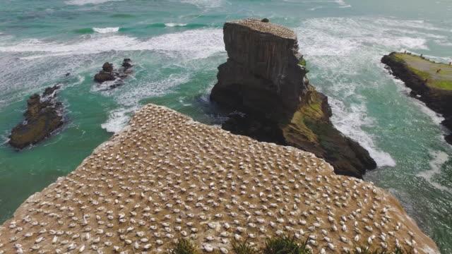 vídeos de stock, filmes e b-roll de gannet colony. - coluna de calcário marítimo