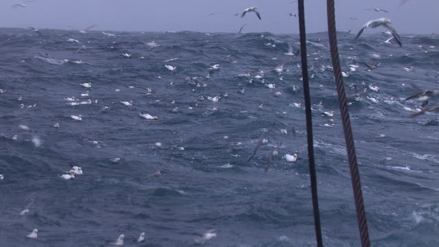 gannets and seagulls follow fishing trawler, uk - scavenging stock videos & royalty-free footage