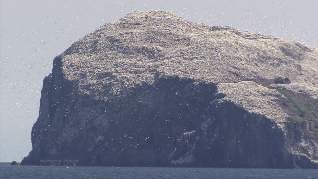 stockvideo's en b-roll-footage met ws gannets flying around  bass rock / bass rock, firth of forth, scotland - firth of forth