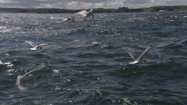ms tu td zi pov gannets flying  low to the water for capturing fish / bass rock, firth of forth, scotland - firth of forth stock videos & royalty-free footage