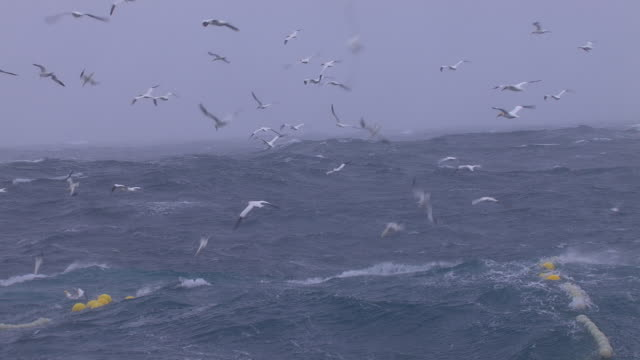 gannets plunge dive around fishing net, scotland, uk - large group of animals stock videos & royalty-free footage