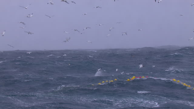 gannets plunge dive around fishing net, scotland, uk - scavenging stock videos & royalty-free footage