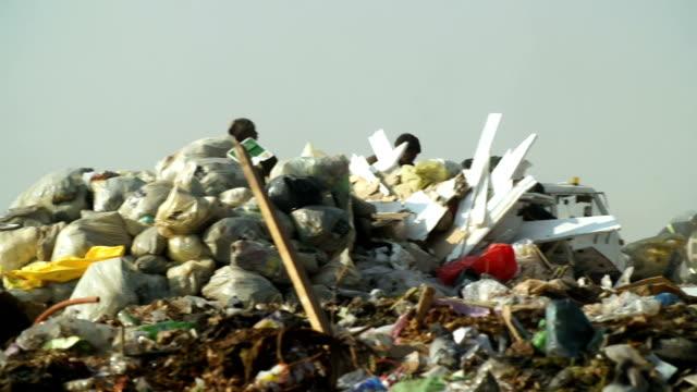 garbage dump, johannesburg, south africa - 数匹の動物点の映像素材/bロール