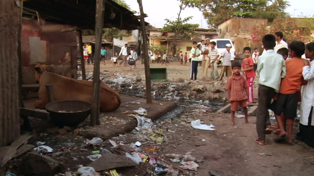 WS Garbage in slum, cow resting in barn and Children playing beside / Mumbai, Maharashtra, India