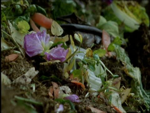 Garden and kitchen waste being thrown onto compost heap