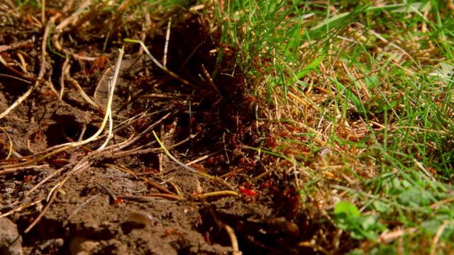 vídeos de stock, filmes e b-roll de garden ants - scarborough norte de yorkshire