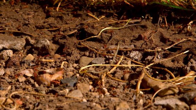 vidéos et rushes de garden ants - mise au point au second plan
