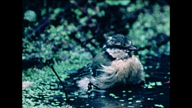 garden birds bathe in pond water; 1978 - 1978 stock videos & royalty-free footage