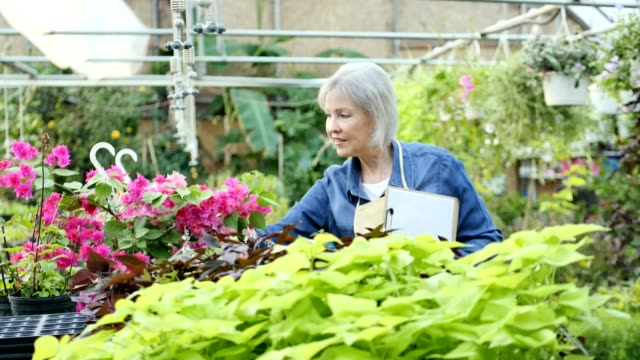 Garden center employee checks health of plants in plant nursery