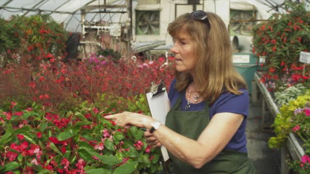 vidéos et rushes de ms garden center employee counting plants in greenhouse , manchester, vermont, usa - une seule femme d'âge moyen