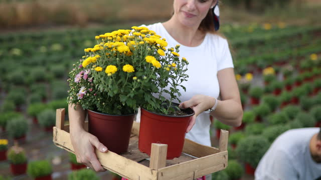 garden center - plant bulb stock videos & royalty-free footage