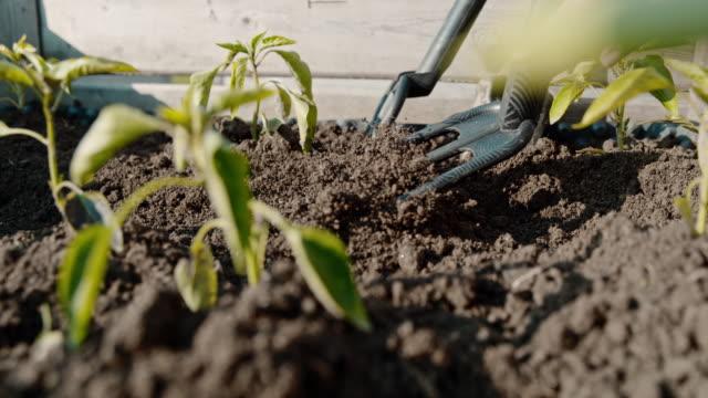 cu super slow motion gartengärtner, der boden zwischen pflanzensäften im sonnigen garten harken - digging stock-videos und b-roll-filmmaterial