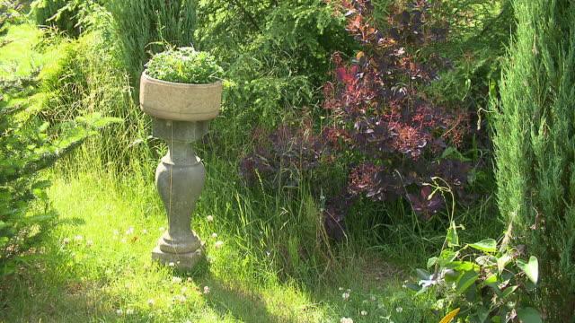garden decoration - strauch stock-videos und b-roll-filmmaterial