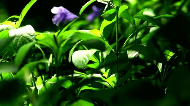 Garden Foliage