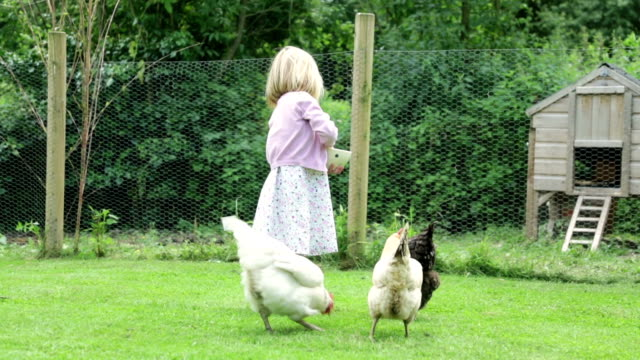 garden hens... - chicken coop stock videos and b-roll footage
