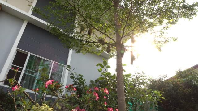 Trädgård i moderna hus, dolly skott