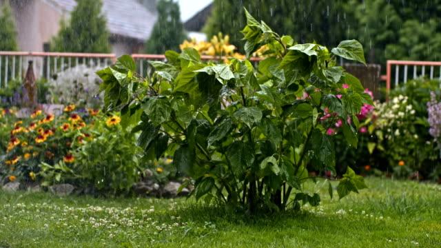 SLO MO tuin in stortregens