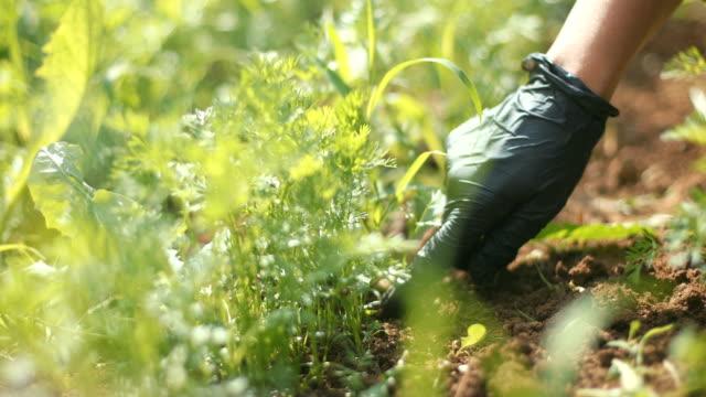vídeos y material grabado en eventos de stock de mantenimiento del jardín - guantes de protección