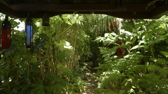 garden on sunny day - bamboo plant stock videos & royalty-free footage