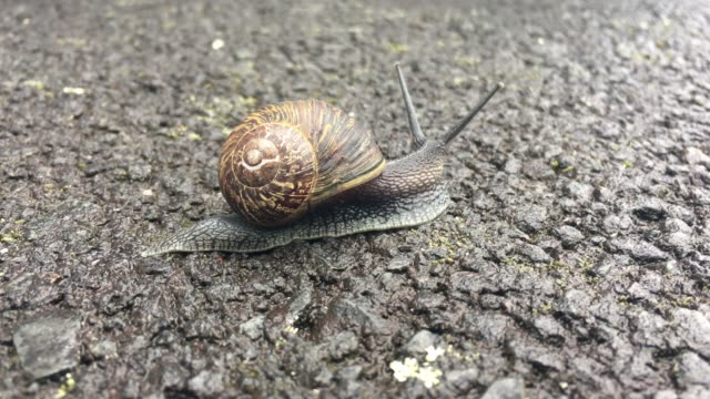 garden snail crawling on asphalt surface - snail stock videos & royalty-free footage