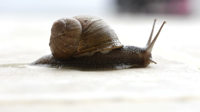 garden snail trailing - slimy stock videos & royalty-free footage