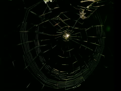 t/l garden spider spins orb web - spins circular section of web to, black background, sits in centre of web - arachnid stock videos & royalty-free footage