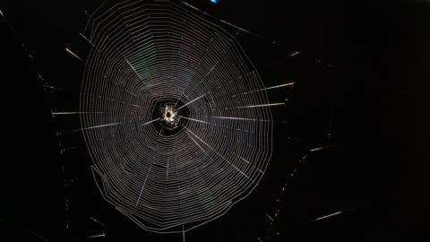 tl garden spider spins silk web at night, uk - 絹点の映像素材/bロール