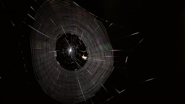 tl garden spider spins silk web at night, uk - film stock videos & royalty-free footage