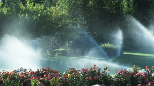 slo mo ws garden sprinklers spraying flowers and lawn in garden, lehi, utah, usa - lehi stock videos and b-roll footage