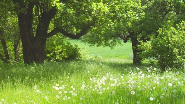 ガーデン - 庭点の映像素材/bロール